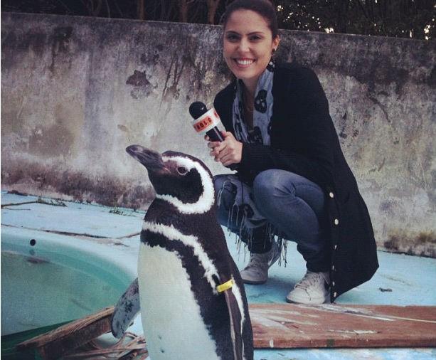 Pinguim (Foto: Divulgação)