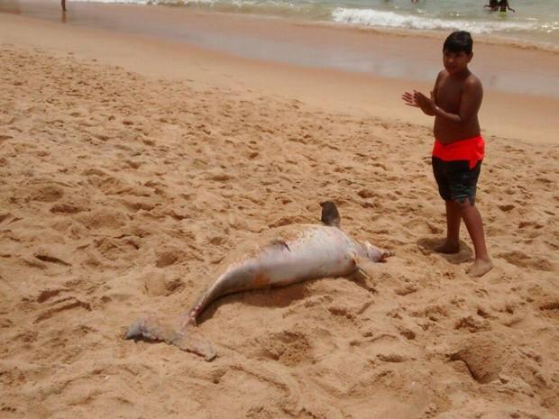 Boto-cinza foi encontrado morto na Praia do Barrão, em Vila velha (Foto:  Waleska Merçon/ Divulgação)