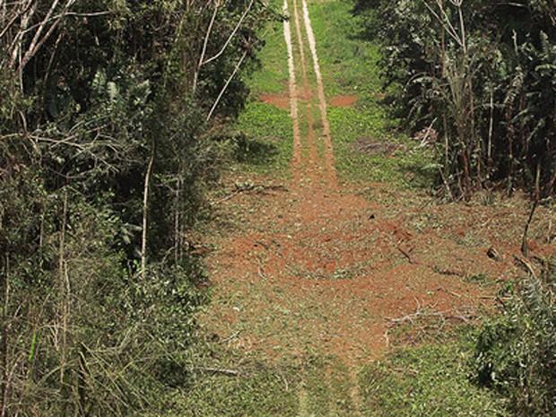 Cratera de 10 metros de largura em pista clandestina após ser atingida por bomba da FAB, em Roraima (Foto: Divulgação/Wellington Simo/FAB)