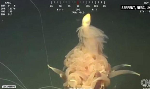 Criatura conhecida como sifonóforo foi filmada na costa de Angola (Foto: Reprodução/YouTube/CNN)
