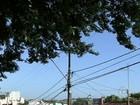 Árvore apoiada em muro e fiação da rede de energia preocupa moradores