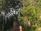 Lea T posa nua em meio à natureza: 'Senhora Rainha da Floresta'