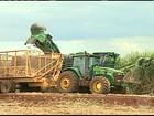Em SP, aumento no custo da lavoura preocupa produtores de cana