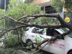 Táxi foi o veículo mais atingido com a queda dos galhos (Foto: Antônio Fontes/G1)