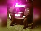 Taxista reage a tentativa de roubo é esfaqueado e criminoso acaba preso