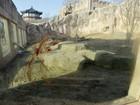 Leão mata tratador em zoológico na Coreia do Sul
