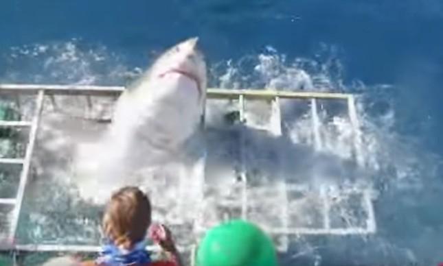 Tubarão dentro de jaula de mergulhador no México