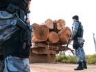Madeireiros são presos extraindo madeira nobre em reserva de RO