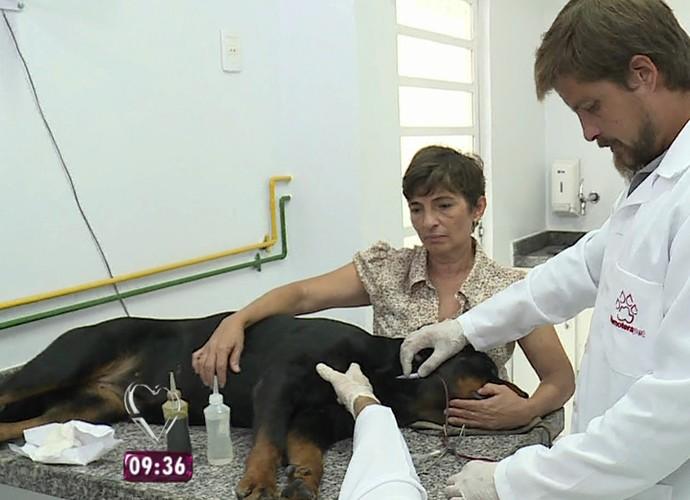 Cães podem ser doadores de sangue (Foto: TV Globo)