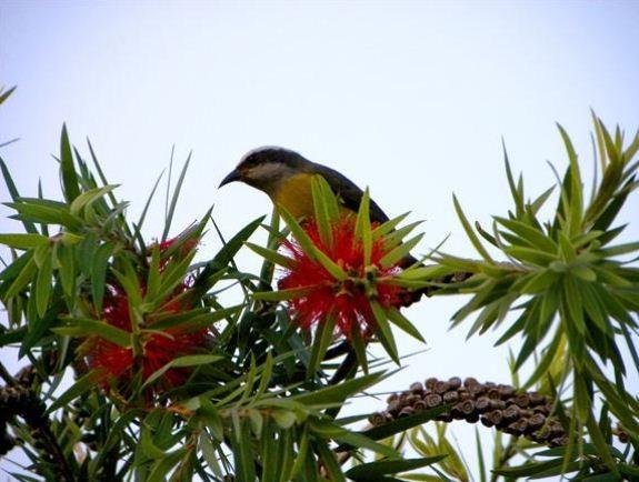 Diversas espécies de aves podem ser observadas nas trilhas (Foto: Parque Atalaia/Divulgação)