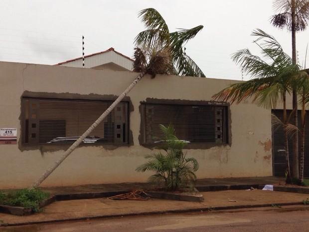 Novo temporal derrubou árvores e destelhou casas em Porto Velho neste domingo, 18 (Foto: Jaqueline Fonseca/TV Rondônia)