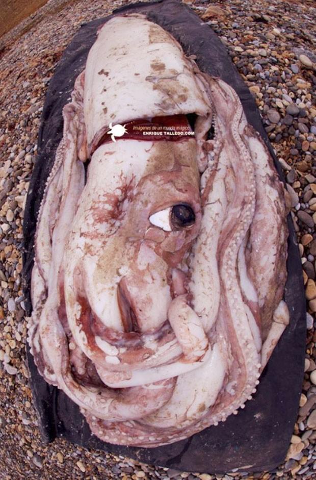 Animal tinha 9 metros de comprimento e quase 200 kg (Foto: Reprodução/Facebook/Enrique Talledo)