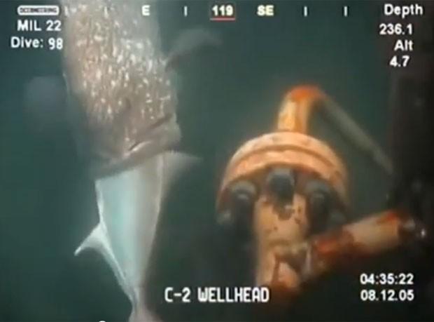 Vídeo foi compartilhado pelo clube de pesca na Flórida (Foto: Reprodução/YouTube/Pensacolafishclub)