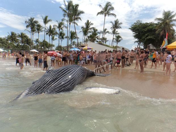 Banhistas auxiliaram na remoção da baleia em Guarujá (Foto: Arquivo Pessoal / Andrea Maranho)