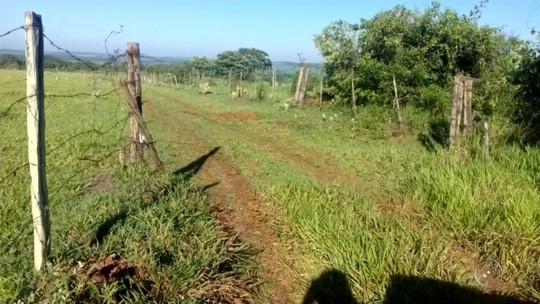 Criminosos furtam 17 cabeças de gado de sítio em Arealva
