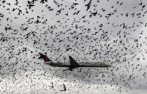 Avião cruzou 'nuvem' de pássaros durante pouso nos EUA [Foto: Andrew Caballero-Reynolds/AFP)