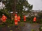 Árvore tomba sobre casas e deixa avenida sem energia em João Pessoa