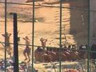 Um preso é morto e cinco ficam feridos no Complexo do Curado