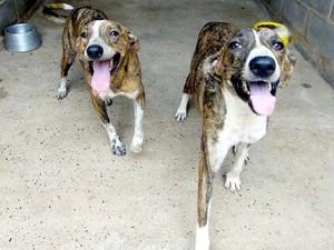 OPA-MT cuida de animais que foram abandonados em Cuiabá. (Foto: Divulgação/OPA-MT)