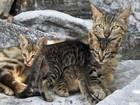 Foto de gata com filhotes mostra ilusão de ótica curiosa