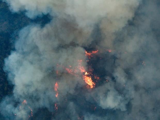Sobrevoo mostra situação na terra indígena Arariboia, no Maranhão (Foto: Marizilda Cruppe / Greenpeace)