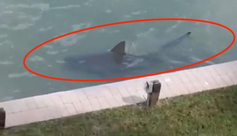 Tubarão é visto nadando ao lado de propriedade na Flórida (Foto: reprodução)