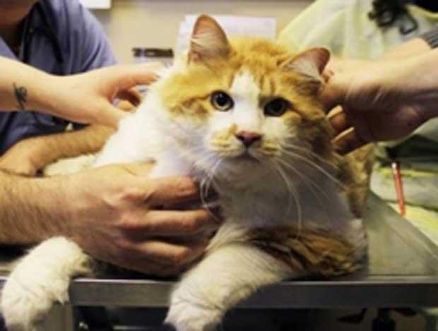 Centro também está procurando um novo lar para 'Garfield'. (Foto: Divulgação)