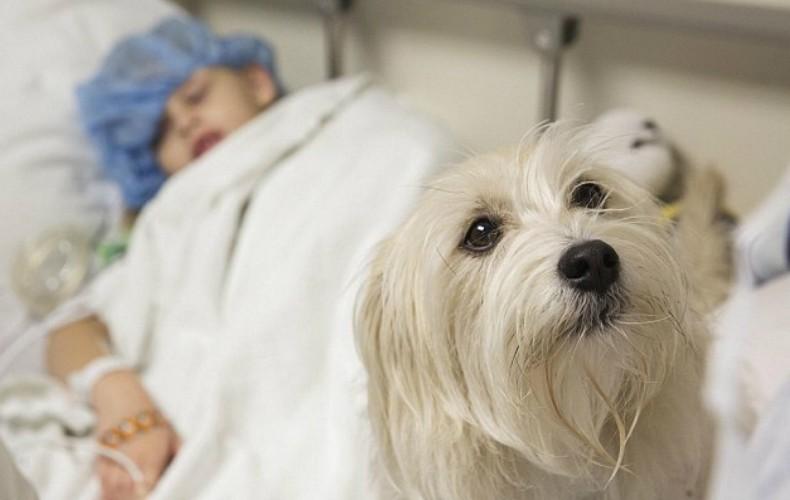 Cão acompanha menina durante cirurgia nos EUA (Foto: Divulgação/Duke Medicine)