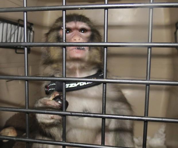 Darwin, já sem o casaco que o tornou famoso, nesta segunda-feira (10) em abrigo de animais em Toronto, no Canadá (Foto: Toronto Animal Services/Reuters)