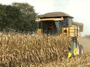 Produtividade do milho safrinha duplicou nos últimos 20 anos, diz pesquisador (Foto: Reprodução/TV Morena)