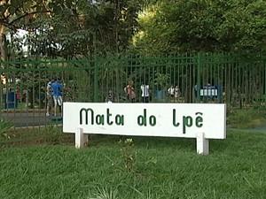 Mata do Ipê parque arborização árvore Uberaba (Foto: Reprodução/ TV Integração)