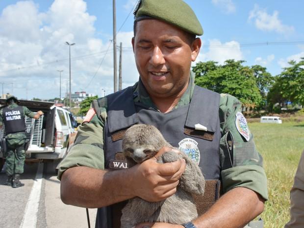 Polícia Ambiental devolverá preguiça ao habitat natural, em João Pessoa (Foto: Walter Paparazzo/G1)
