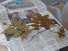 Unir faz acordo com J. Botânico de NY para preservar biodiversidade de RO