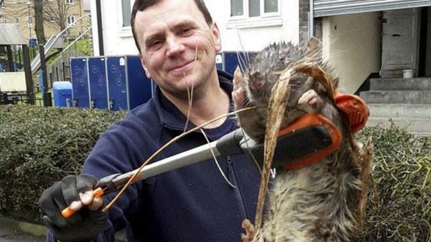 Especialistas mostram verdade sobre roedor 'gigante' em foto que viralizou nas redes sociais. (Foto: BBC)
