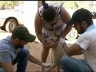 Mutirão coleta sangue de cães para analisar situação do calazar em Gurupi