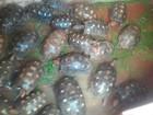 Vinte mil animais são apreendidos em operação conjunta na Bahia