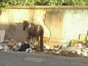 Cavalos soltos pelas ruas preocupam a população (Foto: Sandra Vieira/Arquivo Pessoal)