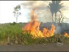 Tocantins ocupa 2ª posição no ranking de queimadas, diz Inpe