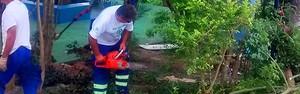 Árvores de Mogi das Cruzes recebem trabalhos de manutenção (Secretaria de Serviços Urbanos)