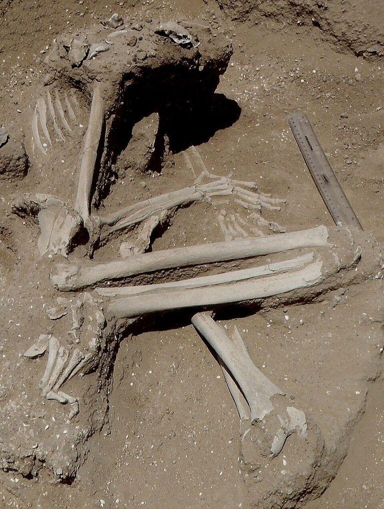 Corpos encontrados pertenciam a uma tribo de caçadores (Foto: Marta Mirazón Lahr)