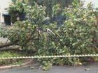 Chuva forte derruba quatro árvores durante a madrugada em São Carlos