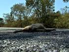 Alta velocidade e pouca sinalização causam mortes de animais silvestres