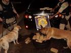 Cães farejadores acham 15 quilos de droga durante abordagem em MT