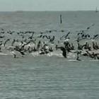 Ilhas isoladas são refúgio de aves no Sul (Reprodução/RBS TV)