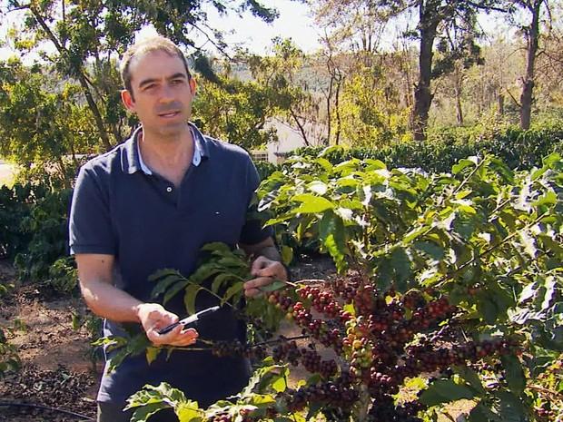 Granação desigual prejudicou a qualidade do café no Sul de Minas (Foto: Reprodução EPTV)