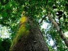 Redução do desmatamento pode 'render' até R$ 30 bilhões para MT