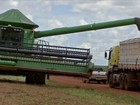 Soja e milho movimentam a economia de pequenos municípios pelo país