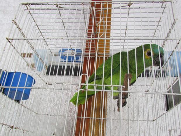 Aves estavam em gaiolas (Fot Famae/Divulgação)