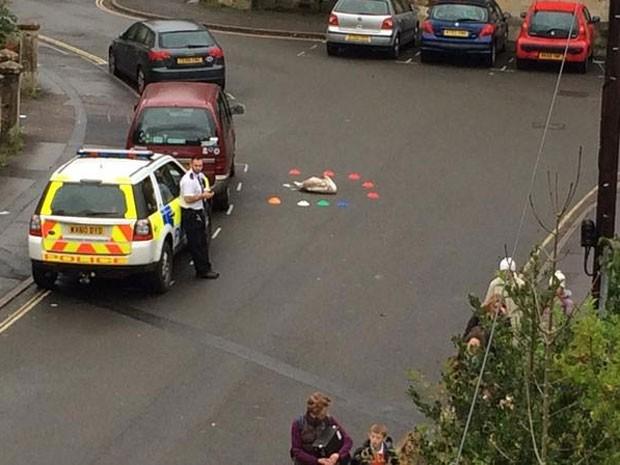 Moradores usaram cones de brinquedo para proteger ave (Foto: Reprodução/Twitter/Anthony Grimley)