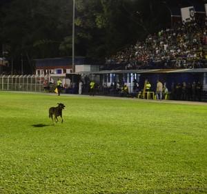 Cachorro no Eduardo Guinle em jogo da Copa do Brasil (Foto: Vinícius Eyer / Jornada Interativa)